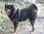 Hunde - Die Hunde (Canidae) sind eine Familie innerhalb der Überfamilie der Hundeartigen.