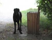 Deutsche Dogge - Sie wickeln uns um den kleinen Finger sozusagen - denn wer kann den Augen einer Dogge schon widerstehen? Deswegen brauchen Doggen einen geregelten Tagesablauf mit einer gewissen Ruhe und Gleichmäßigkeit.