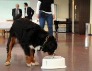 Hundebetreuung Wien - Atemgasdiagnostik