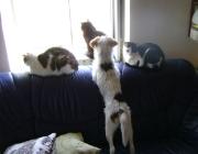 Hunde - Katzen / Sanfte Bestechung von Menschenhand hilft den beiden, eine Brücke zueinander zu bauen. Streicheln und extra Leckerli helfen sowohl Hund als auch Katze, geduldig zu bleiben und die Anwesenheit des anderen als durchaus angenehm einzustufen.