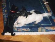 Hunde - Katzen / Haben die Tiere - evt. durch unüberlegtes Handeln des Besitzers- erst einmal eine Aversion gegen das andere Tier aufgebaut, wird es sehr viel komplizierter.