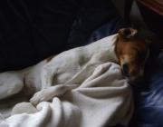 Dogsitting Vor Ort - Tierbetreuer Wien