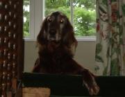 Tierbetreuung Wien - Hunde Betreuung Stieglecker