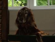 Vorort Hundebetreuung - Dogwalking, Dogsitting, Dog Care Vienna