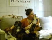 Hundebetreuung Wien - Dog Sitting