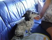 Hundebetreuung Wien - Dogsitting