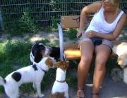 Hundebetreuung Wien - Dogwalking