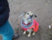 Outdoor Dogwalking - Hunde Einzelbetreuung Wien