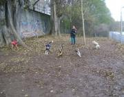 Outdoor Dogwalking - Hunde Gruppenbetreuung Wien