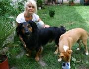 Hund - Mensch / Damit das Zusammenleben beiden Seiten Freude bereitet, muss zwischen Mensch und Hund eine stabile Bindung bestehen.