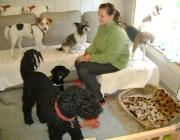 Hund - Mensch / Das Zusammenleben mit Mensch und Hund ist nicht immer einfach. Das weiß jeder, der einen vierbeinigen Freund zu Hause hat. Aber wollen wir ihn missen!? Mit Sicherheit gibt es hierauf nur eine Antwort: Nein.