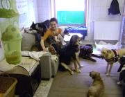 Hund - Mensch / Unter allen Heimtieren ist der Hund ein besonders begabter Lebenspartner, weil er sich dank seiner Lernfähigkeit nahezu jedem Menschen anpassen kann.
