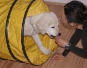 Hund - Mensch / Das heißt, eine Familie mit kleinen Kindern sollte sich für eine andere Rasse entscheiden als ein Jäger, der den Hund vorwiegend für die Jagd benötigt. Aber auch die Größe und die Eigenschaften, Charakter und Wesensmerkmale der Hunderasse spielen eine wichtige Rolle, denn davon sind der Aufwand (zeitl., räumlich und finanziell) abhängig.