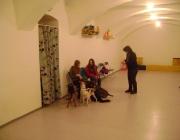 Tierbetreuung  Wien - Kids & Dogs
