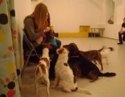 Tiersitter Service Wien - Kids & Dogs