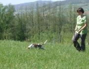 Hundetraining - Fährtensuche / Die Nasenarbeit, zu der auch Fährtentraining zählt, ist eine natürliche Beschäftigungsmöglichkeit für das Nasentier Hund.