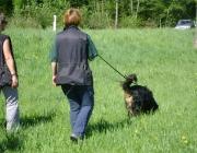 Hundetraining -  Fährtensuche / Die Nasenarbeit führt zu einem ausgeglicheneren Hund und verstärkt die Mensch-Hund Beziehung.