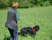 Hundetraining -  Fährtensuche / Außerdem bietet Nasenarbeit eine hervorragende Möglichkeit, ältere Hunde sowie körperlich vorübergehend oder dauerhaft behinderte Hunde zu beschäftigen.