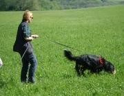 Hundetraining -  Fährtensuche / Die Fährtensuche ist eine Suchart, welche leider nicht sehr oft zum Einsatz kommt. Dies liegt vor allem daran, dass meist nicht genau bekannt ist, von welchem Punkt aus sich die vermisste Person entfernt hat.