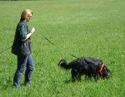 Hundetraining -  Fährtensuche / Um eine Fährtensuche zu beginnen, muss der Hundeführer den Hund relativ exakt an den Ausgangspunkt der Fährte (z.B. das Wohnhaus oder das abgestellte Auto) bringen, nur dann kann der Hund die Fährte aufnehmen und ihr bis zur vermissten Person folgen.