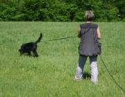 Hundetraining -  Fährtensuche / Anwendung findet diese Suchart vor allem dann, wenn nach einem Unfall das Unfallopfer im Schock den Unfallort verlässt.