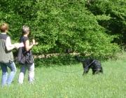 Hundetraining -  Fährtensuche / Die Fährtensuche besteht darin, Personen aufgrund von mehr oder weniger zahlreichen Geruchshinweisen (Spuren, Gegenstände, mutmaßliche Indizien...) zu suchen.