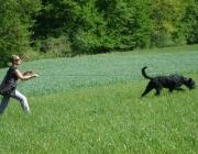 Hundetraining -  Fährtensuche / Die Aufgabe besteht darin, eine oder mehrere Personen zu entdecken bzw. irgendeinen Gegenstand, der für den Laufhund mit ausgeprägtem Geruchssinn, zum lautlosen Aufspüren an der Leine oder in ihrer unmittelbaren Nähe verloren oder versteckt wurde, zu entdecken oder einfach die Fluchtrichtung zu erkennen.