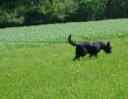 Hundetraining -  Fährtensuche / Bei der Fährtensuche folgt Ihr Hund einer zuvor vom Menschen gelegten Spur.