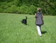 Hundetraining -  Fährtensuche / Hierbei kann er seine Nase, die eins seiner wichtigsten Sinnesorgane ist, optimal einsetzen.