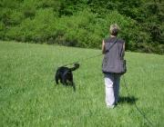 Hundetraining -  Fährtensuche / Durch die intensive Suche wird Ihr Hund geistig und körperlich gefordert, und ist somit optimal ausgelastet.