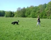 Hundetraining - Fährtenarbeit / Die Fährtensuche ist ein Hundesport für jung und alt. Dies gilt für Mensch und Tier. Sie erfordert viel Fleiß und intensives, wenn möglich tägliches Üben.