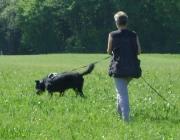 Hundetraining - Fährtenarbeit / Bei der Fährtenarbeit muss der Hund in einem Gelände (z.B. Acker oder Wiese) durch den Einsatz seines Geruchsinnes Gegenstände finden und den erfolgreichen Fund seinem Hundeführer durch ein entsprechendes Verhalten anzeigen.