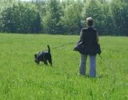 Hundetraining -  Fährtenarbeit / Nutzt man z. B. den Nahrungstrieb, so gelingt es schnell, die Verknüpfung