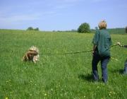 Hundetraining -  Fährtenarbeit / Der Hund lernt, der Fährte unter Anleitung zu folgen.