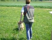 Hundetraining -  Fährtenarbeit / Da die Übung auf Dauer aber sehr anstrengend sein kann, sollte sie nicht öfter als dreimal pro Woche anstehen.