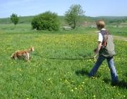 Hundetraining -  Fährtenarbeit / Hunde sind in der Lage, selbst kleinste Duftspuren wahrzunehmen und können anhand von unterschiedlichen Geruchsstärken feststellen, in welche Richtung die Spuren führen.
