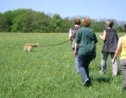 Hundetraining -  Fährtenarbeit / Dementsprechend kann der Halter es für den Vierbeiner nach und nach kniffliger machen, indem er die Fährte länger zieht und Kurven einbaut.
