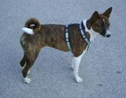Hunde (Canidae) - Zur Beurteilung der Riechleistung reicht das aber bei Weitem nicht aus: Messungen haben ergeben, dass das Riechvermögen des Hundes etwa eine Million mal besser ist als das des Menschen.
