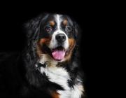 Hundebetreuung Wien - Hundefotos