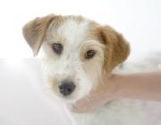 Haustier Betreuungsdienst Wien / Portrait von Hunden