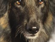 Tiersitting Wien / Portrait von Hunden