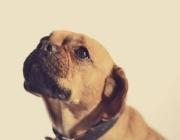 Haustiersitting Wien / Portrait von Hunden