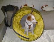 Tierbetreuung Stieglecker - Welpentraining Indoor Outdoor Photos - Hundewelpen Erziehungskurse