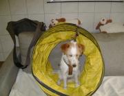 Tierbetreuung Stieglecker - Welpentraining Indoor Outdoor Photos - Hundewelpen Trainingskurse