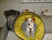 Tierbetreuung Stieglecker - Welpentraining Indoor Outdoor Photos - Hundewelpen Indoorkurse