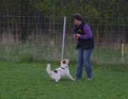Tierbetreuung Stieglecker - Welpentraining Indoor Outdoor Photos - Welpen Outdoor Einzeltraining