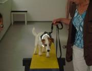 Tierbetreuung Stieglecker - Welpentraining Indoor Outdoor Photos - Hundewelpen Indoor Training