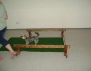 Tierbetreuung Stieglecker - Welpentraining Indoor Outdoor Photos - Hundewelpen Cavaletti Training