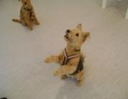 Tierbetreuung Stieglecker - Welpentraining Indoor Outdoor Photos - Indoor Hundewelpentraining