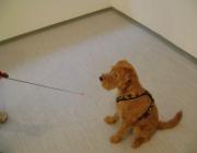 Tierbetreuung Stieglecker - Welpentraining Indoor Outdoor Photos - Welpenerziehung